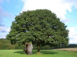 Baum mit grabendem NAshorn